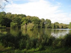 Brittens Pond, Guildford, wheelchair walk