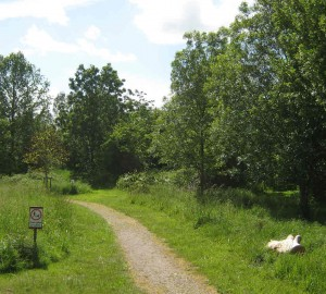 Fox Corner Community Nature Reserve, wheelchair walk in Surrey
